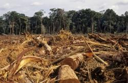 deforestazione palma