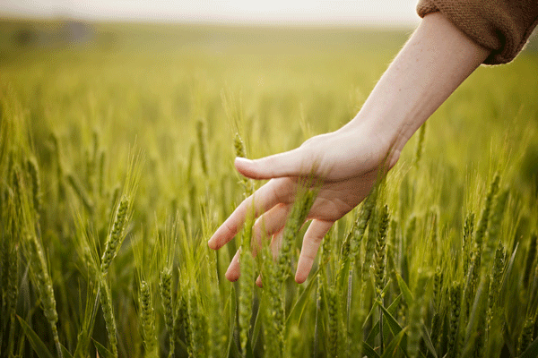 biodiversità alimentare tutela legge