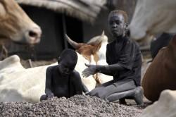 bambini-vacche
