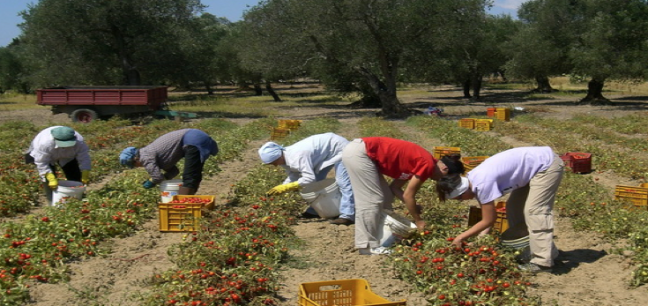 sfruttamento donne romene campi sicilia